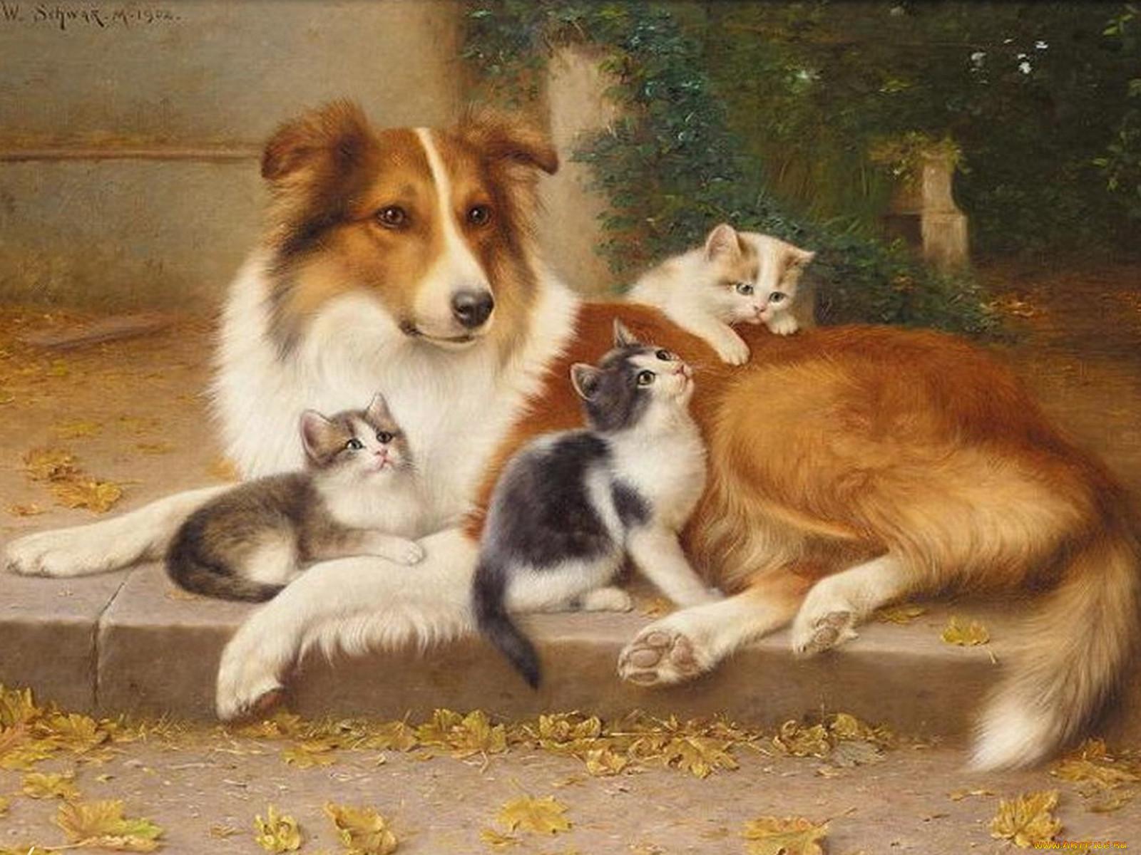 цветные картинки собак и кошек тем как начать